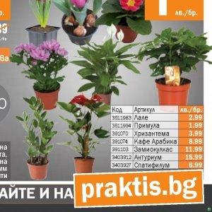 Цветя в PRAKTIS