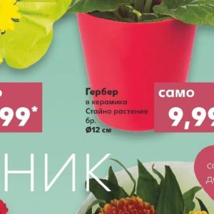 Цветя в Kaufland хипермаркет