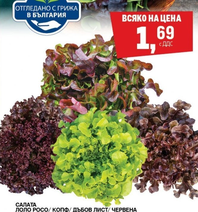 Зелена салата в МЕТРО